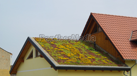 green roof green roof 01
