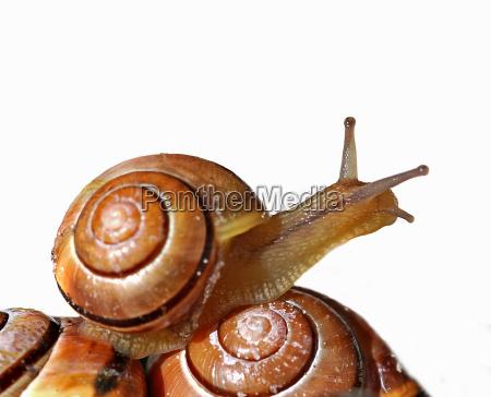 slug - 1372775