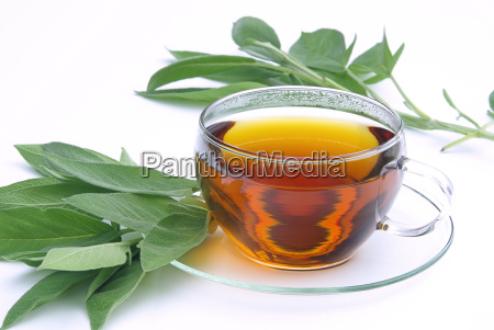 sage, tea, -, tea, say, 01 - 1373043