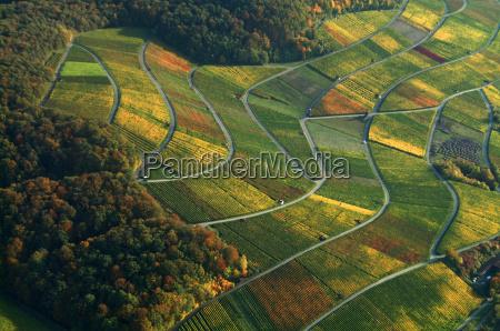 vineyard viticulture landscape vineyard landscape