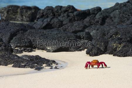 galapagos, crab - 1377859