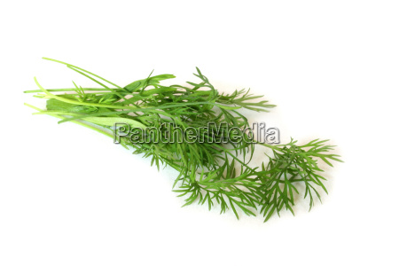 dill - 1390255