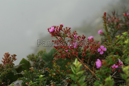 endemic plant in front of clouds