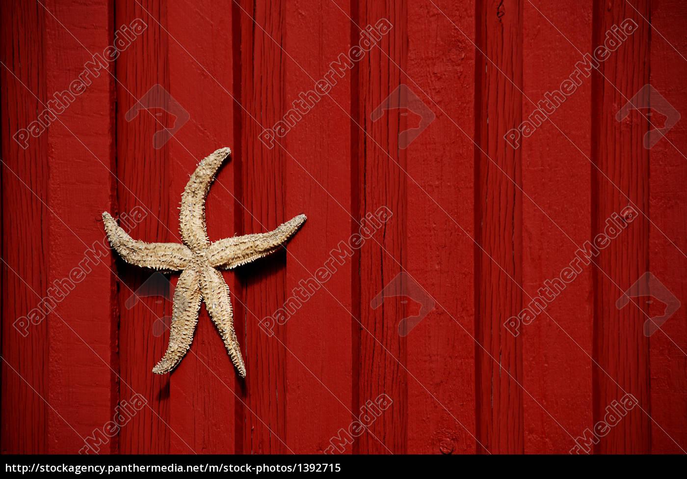 starfish - 1392715