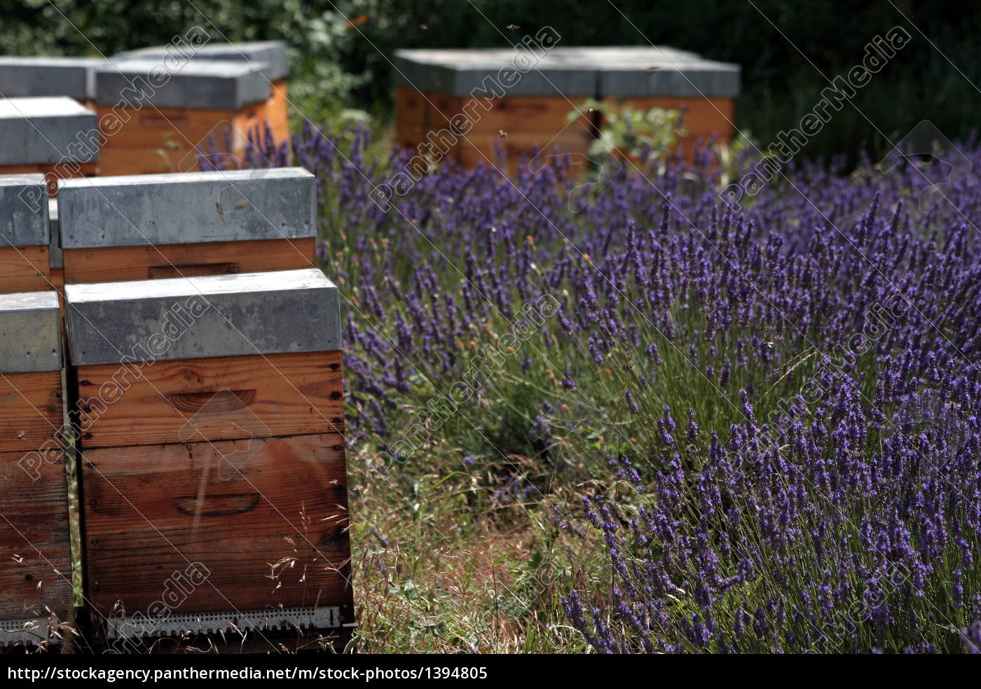 beehive, on, lavender, field - 1394805