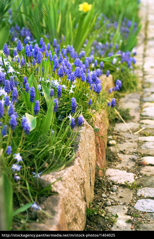 sonig, garden - 1404025