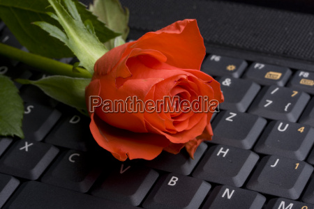 red rose on laptop keyboard