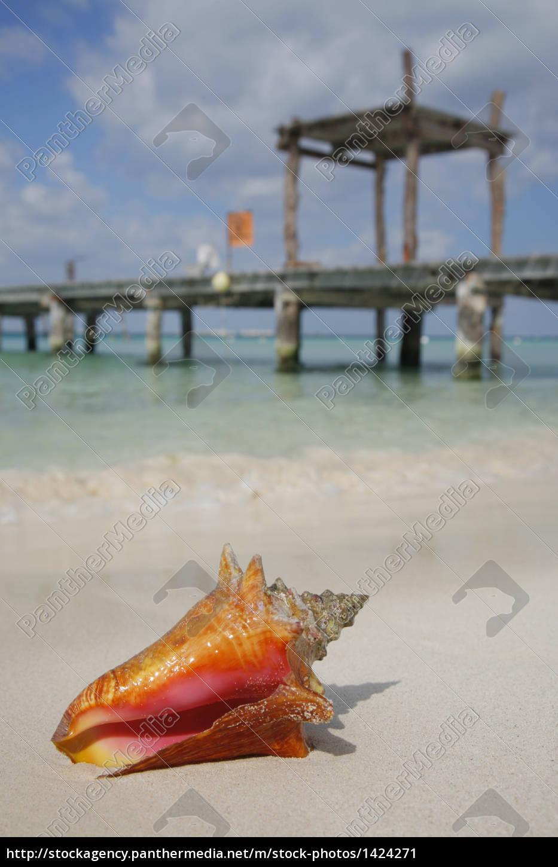 life, is, a, beach, (conch) - 1424271
