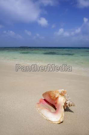 tropical, beach, and, conch - 1424679
