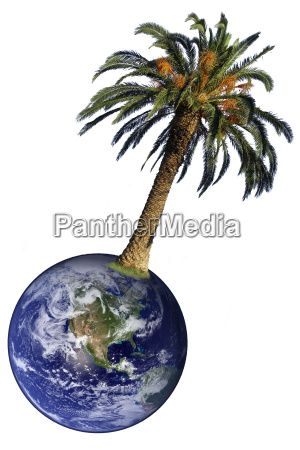 palm and earth isolated
