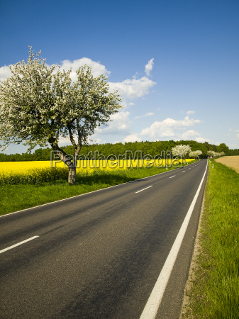 blossom on rapeseed field with road
