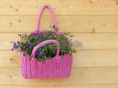 flower, basket - 1439639