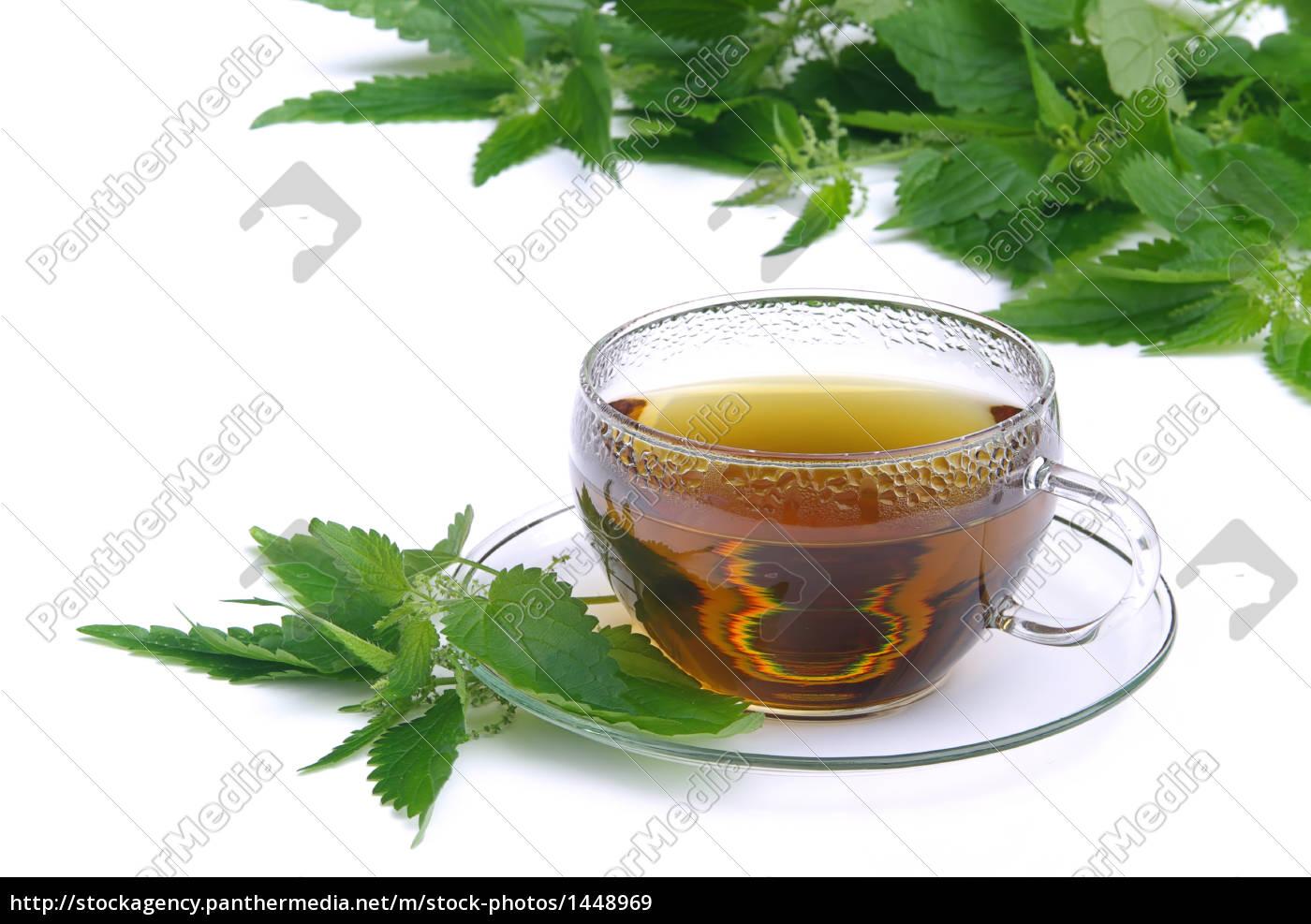 nettle, tea, -, tea, nettle, 01 - 1448969