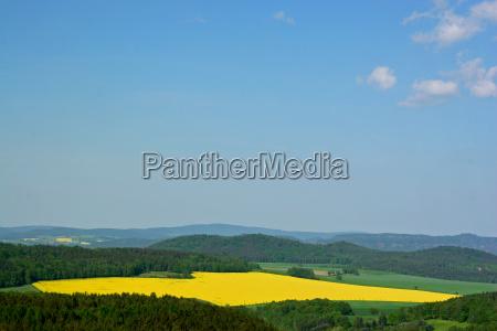 yellow sheets