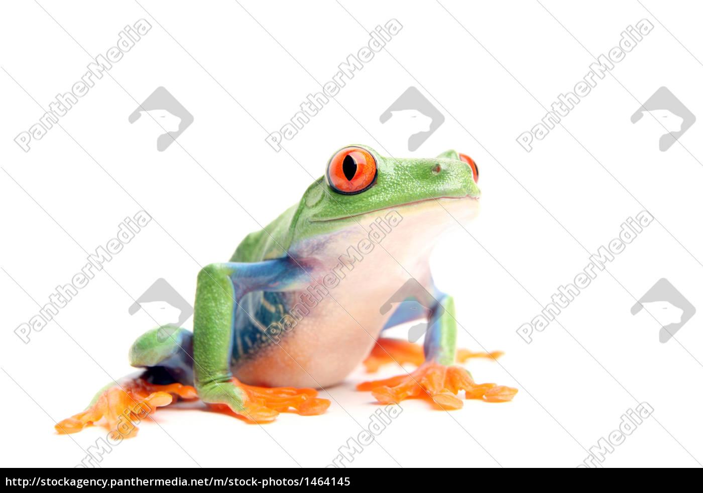 frog, on, white - 1464145