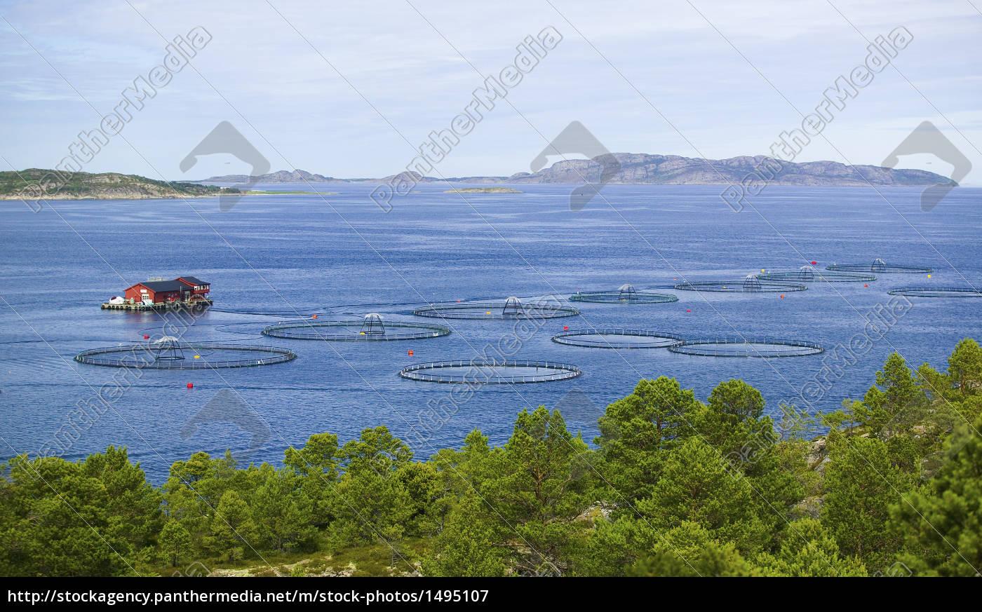 fish, farm, akvakultur, norway, coast - 1495107