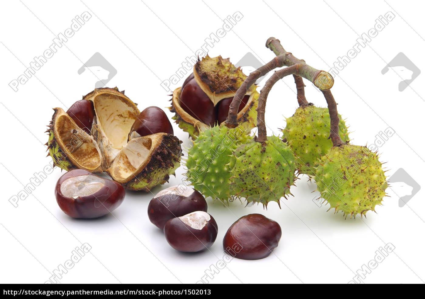 chestnut, -, conker, 10 - 1502013
