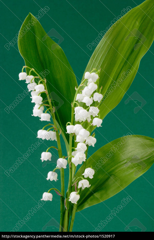 flowers - 1520917