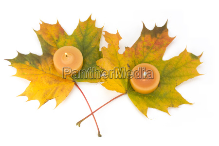 autumnal, maple, leaves, with, tea, lights - 1526873
