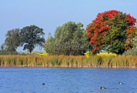 autumn idyll by the lake