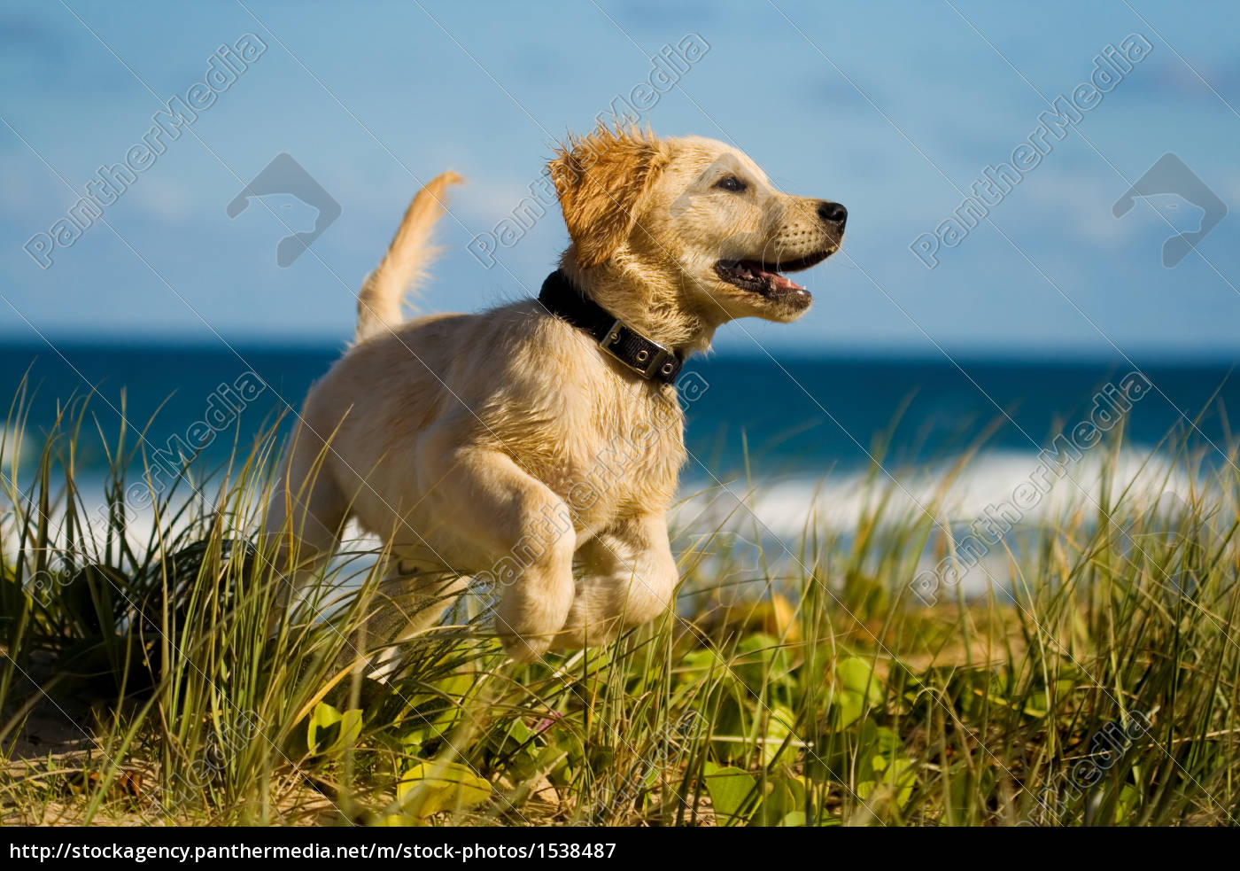 puppy, jumping, on, the, beach - 1538487