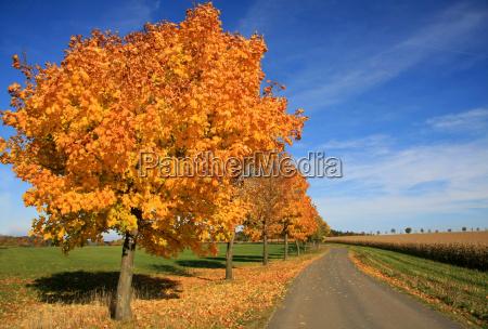 road through the autumn