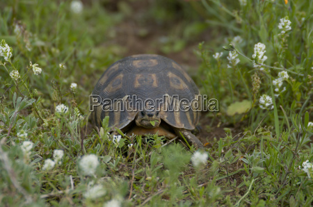 turtle in westcoastnp