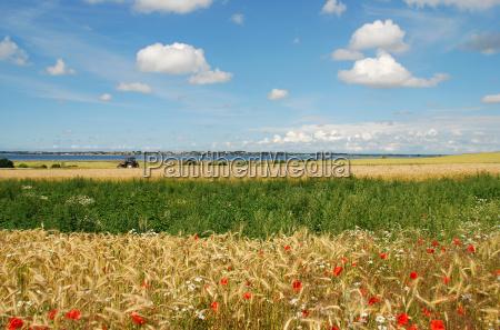 summer, harvest - 1553205