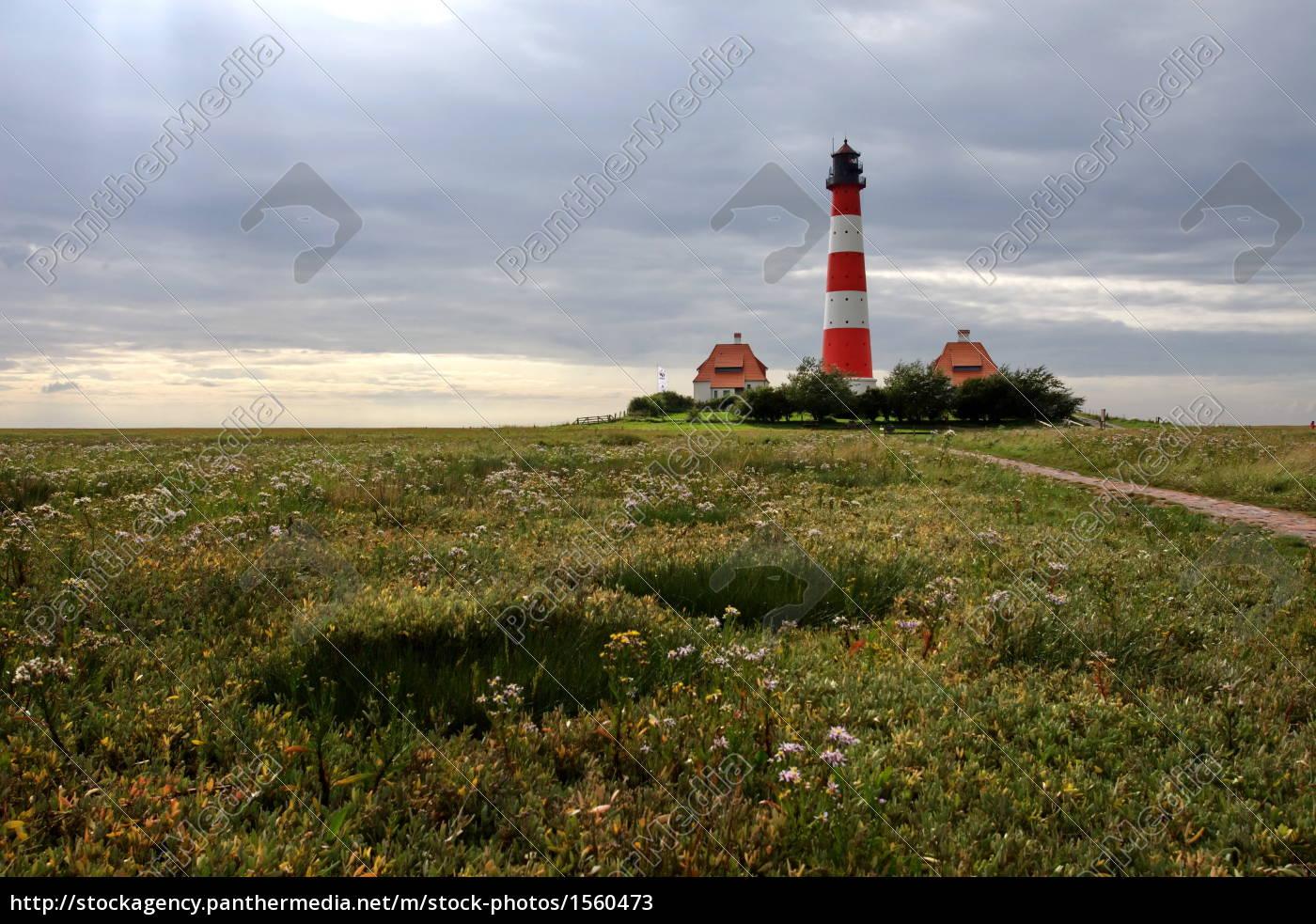 westerhever, salt, marshes - 1560473