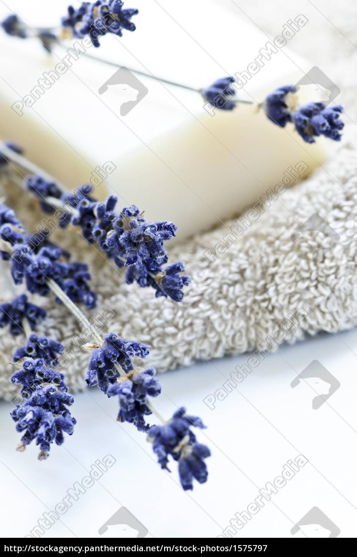 lavender, soap - 1575797