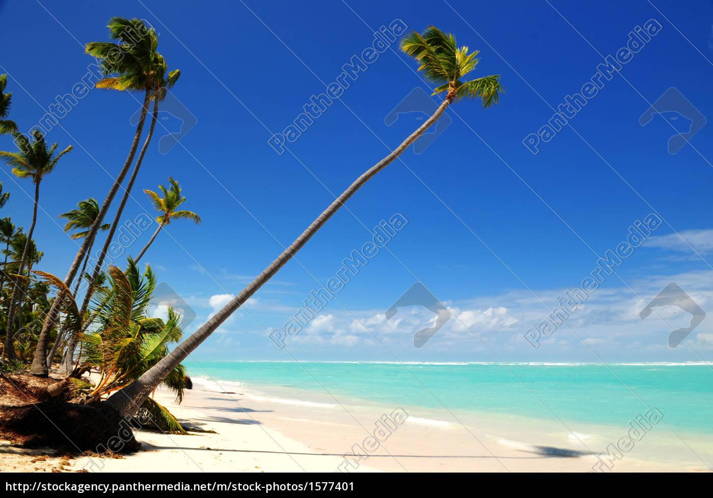 tropical, beach - 1577401