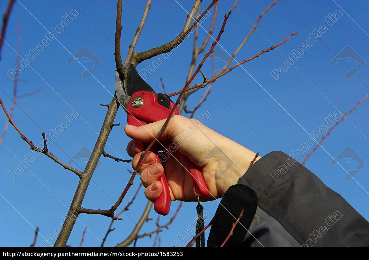 intersect, tree, -, tree, cutting, 21 - 1583253