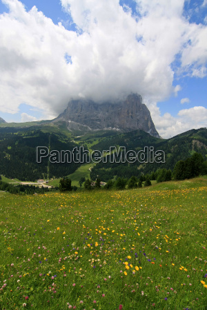 mountains alps alp flower meadow mountain