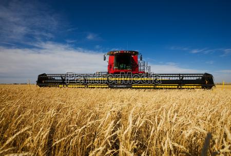 harvesting, wheat - 1597519