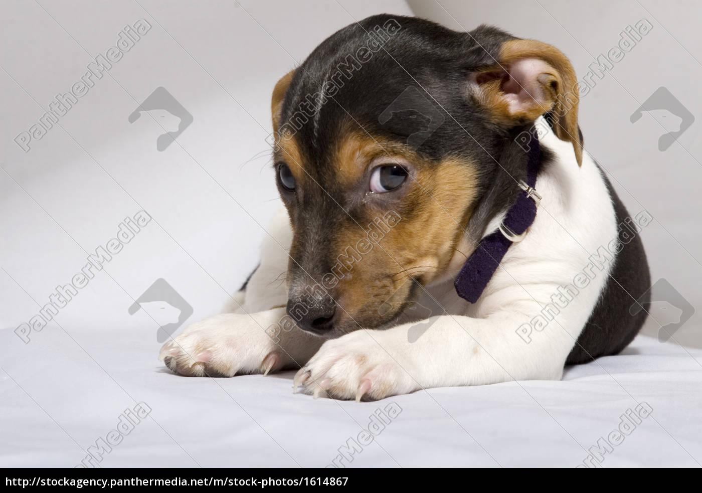 small, dog - 1614867