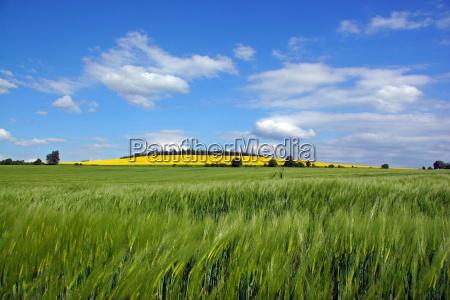 hill field spring grain field barley
