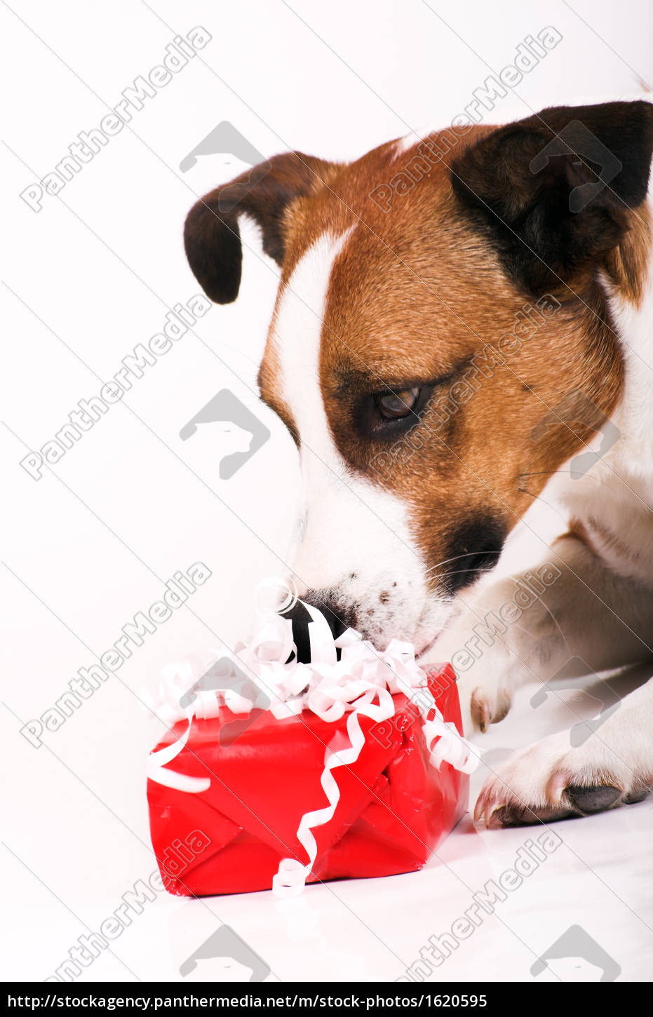 dog, with, gift - 1620595