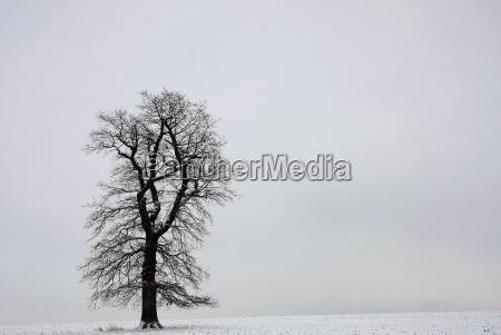 winterbeginn