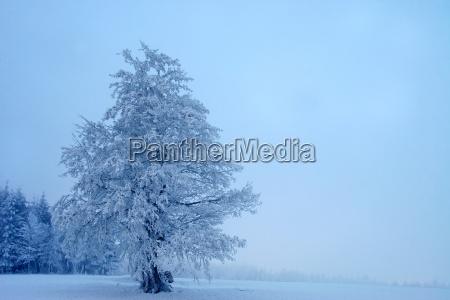 mystical winter landscape