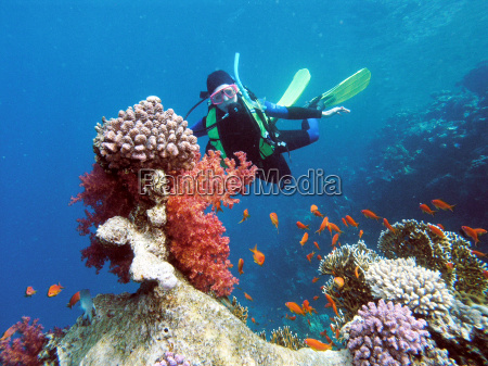 diver, in, the, coral, reef - 1655565
