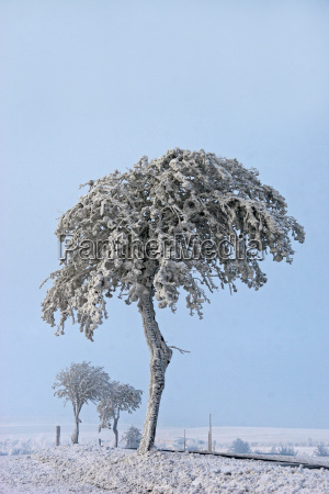 tree winter cold ice snow nature