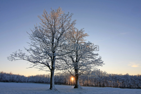 tree winter sunset winter landscape setting