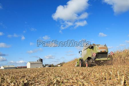 harvest of corn gmo