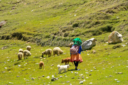 shepherdess in the andes