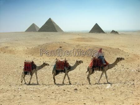 three, camel, caravan, going, through, the - 1688905