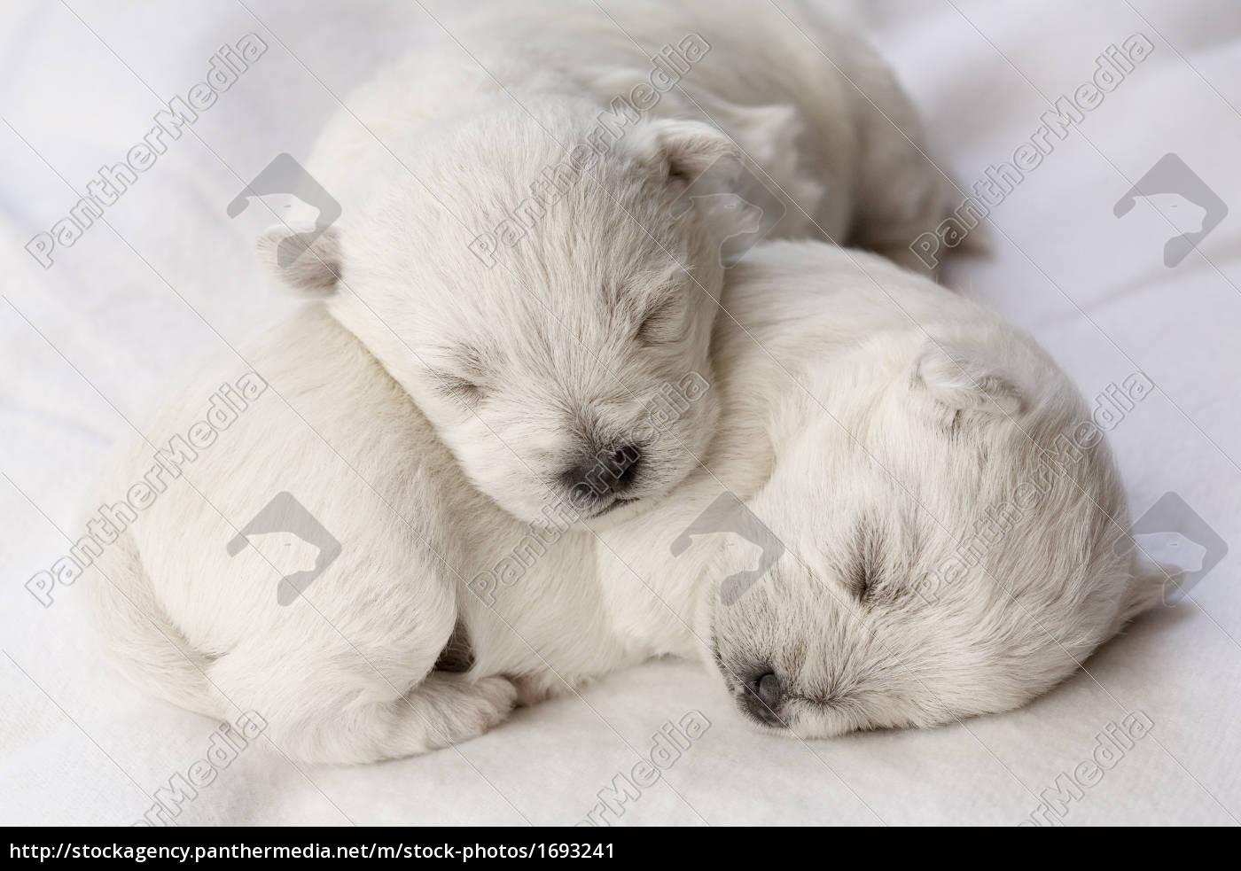 sleeping, puppies - 1693241