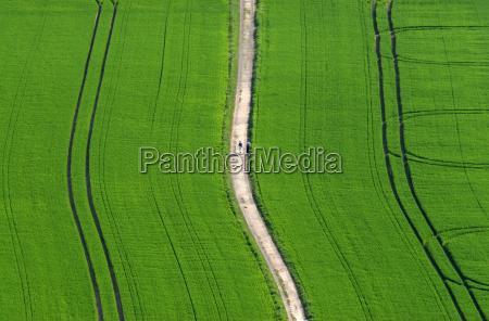 way through spring fields