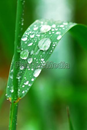 raindrops, on, grass - 1704247