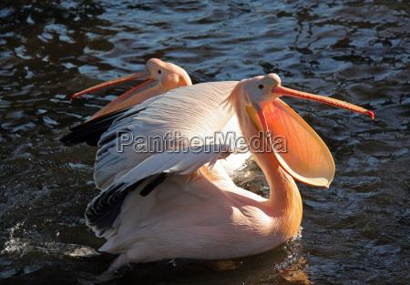animal bird birds feathers beak to
