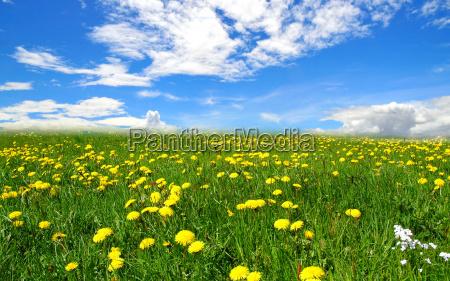 landscape clouds meadow